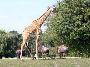 © Safaripark Stukenbrock