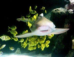 © Sea Life